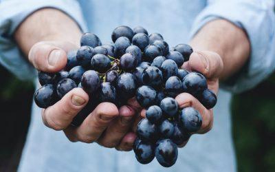 Idaho is the top emerging wine region in America